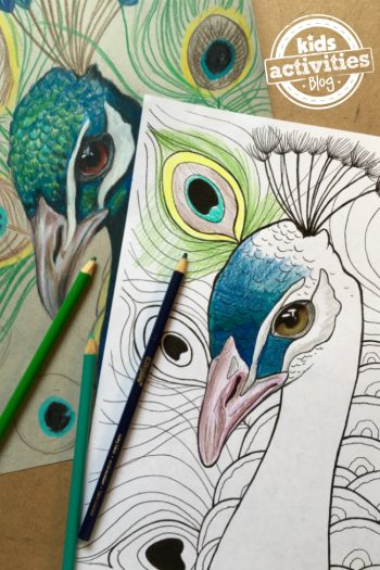 peacock coloring page colored