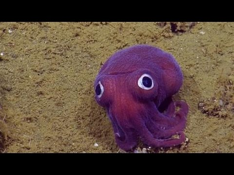 This Adorable Squid Looks Like A Child's Stuffed Animal…