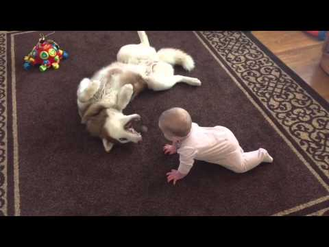 He Looks Vicious, But This Pup Really Just Loves This Baby!