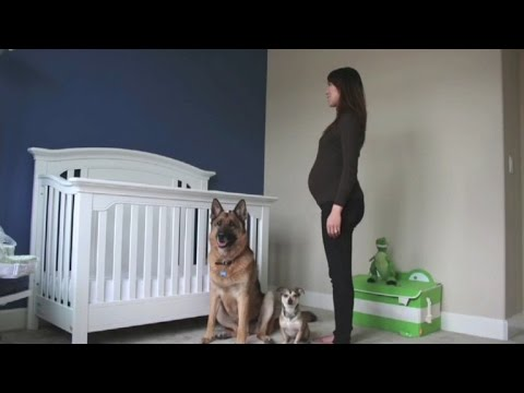 This Is A Pregnancy Timelapse Video Like you've Never Seen