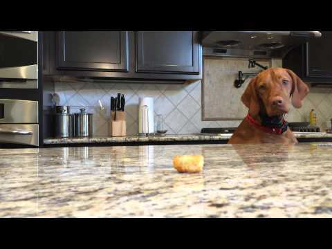 This Dog Knows What He Wants, And He Wants It NOW