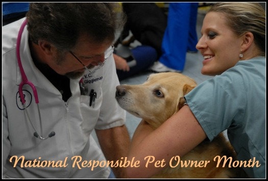 Responsible Pet Owner Month