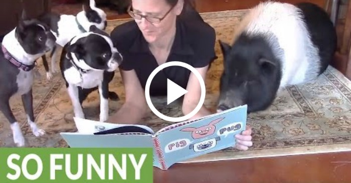 woman gathers animals for story time