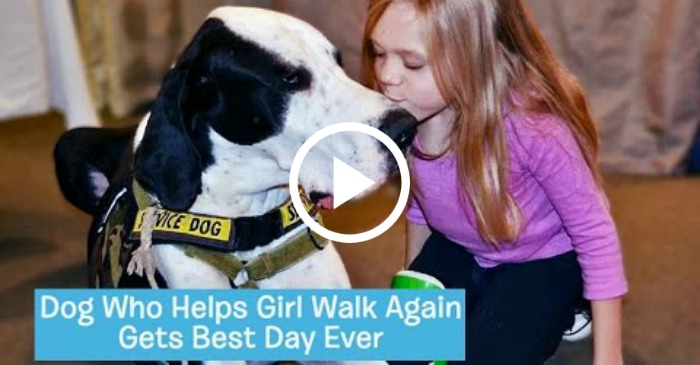 best-day-ever-for-service-dog