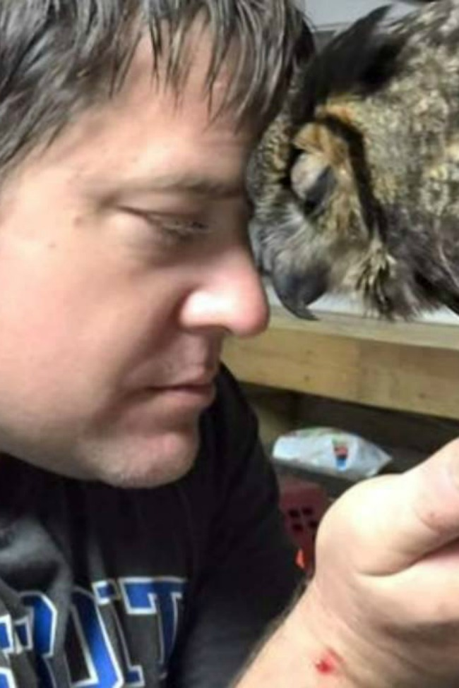 Adorable Rescued Owl Hugs Man Who Saved Her Life