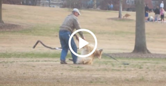 dog-plays-dead-to-stay-at-park