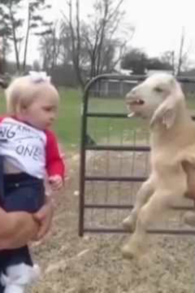 baby-and-goat