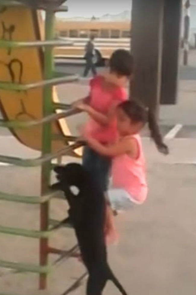Dog Climbs Ladder On Playground To Go Down Slide
