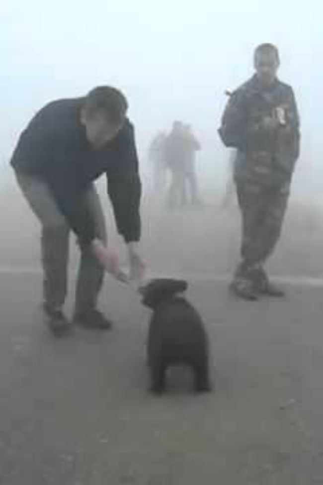 Man Viciously Mauled By Baby Bear, Dies From Cuteness