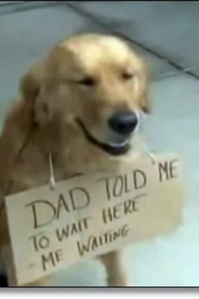 Patient Dog Waits For Owner Outside Store