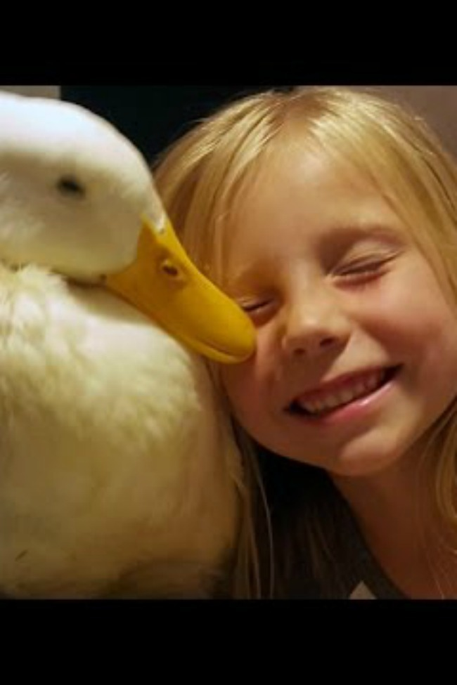 Duckling Imprinted On Little Girl, Now She's Mom For Life