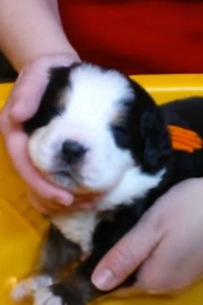 Puppy's First Bath Is The Sweetest Thing You'll Ever See!