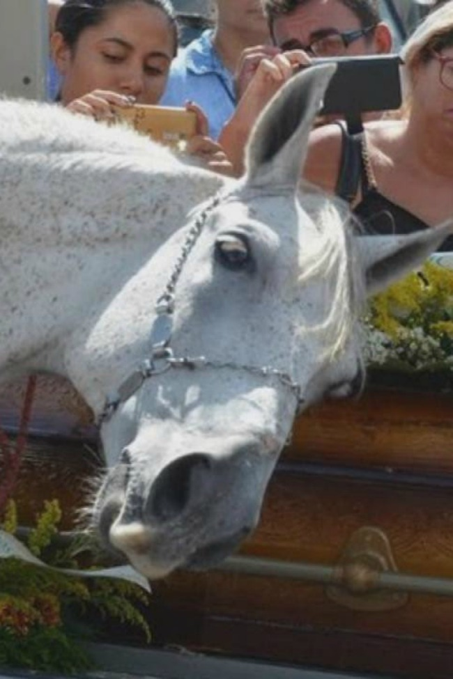 Heartbreaking Video Of A Horse Saying Goodbye To His Owner…