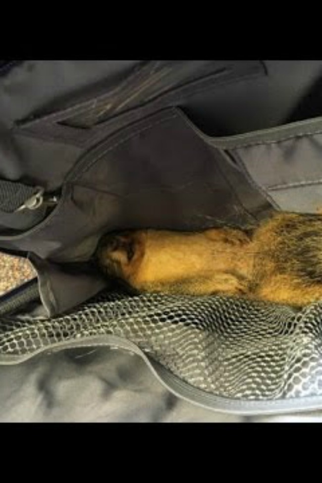 Mom Gets Hilarious Call About A Dead Squirrel In Her Son's Backpack