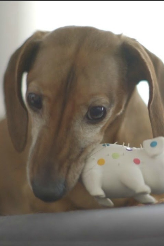 Dog Reunited With Favorite Toy After Five Years, Can't Stop Talking To It