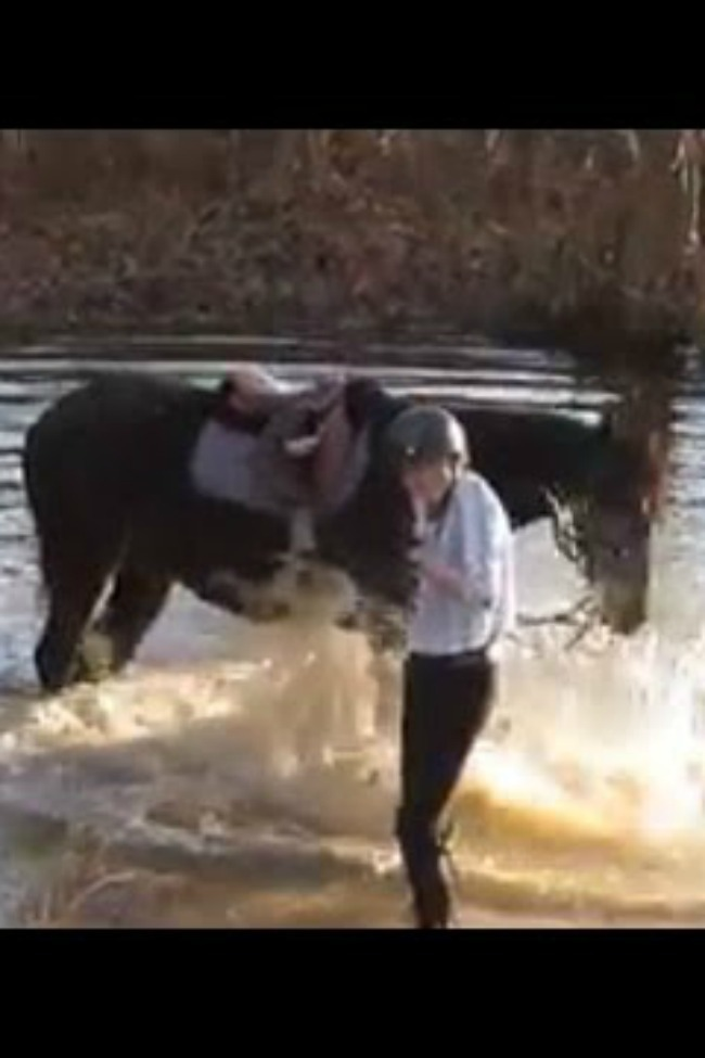 Horse Discovers Splashing In The River Is Fun