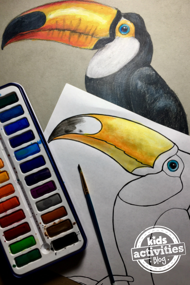 Toucan Coloring Pages for Kids and Adults
