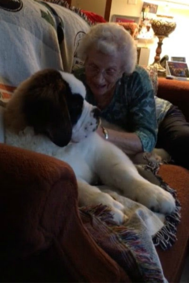 Widow Becomes Best Friends With Giant Puppy