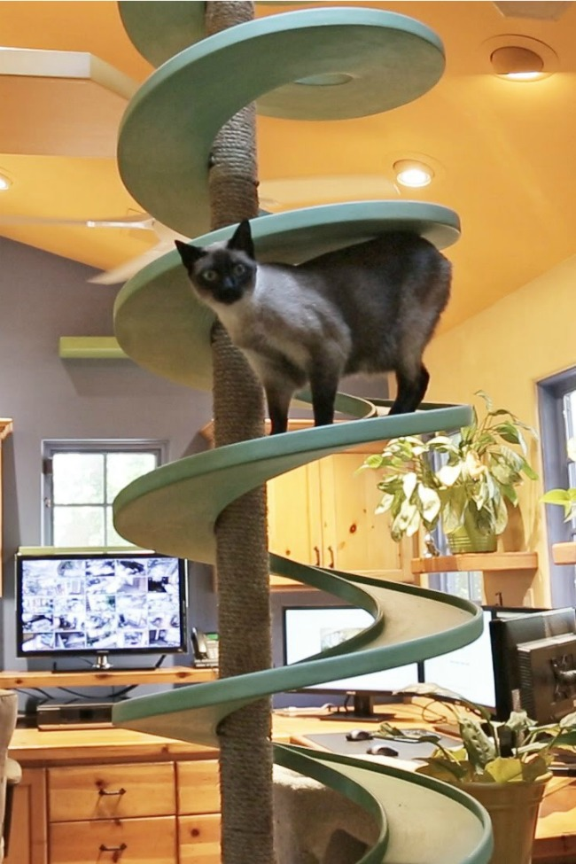 Man Turns His House Into An Indoor Cat Playland