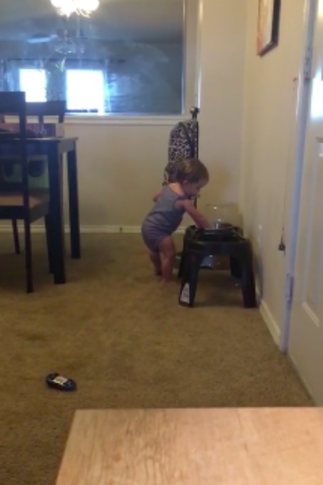 Baby Tries To Fill Dogs' Bowls With Water Using Only Her Hand