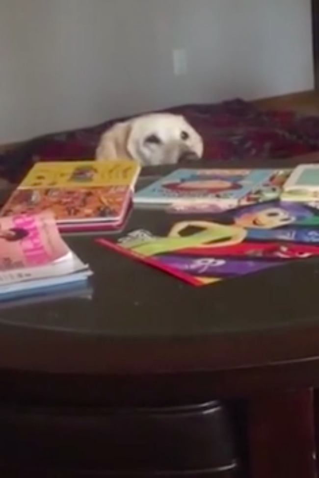 Puppy Plays Peekaboo With Baby Like A PRO!