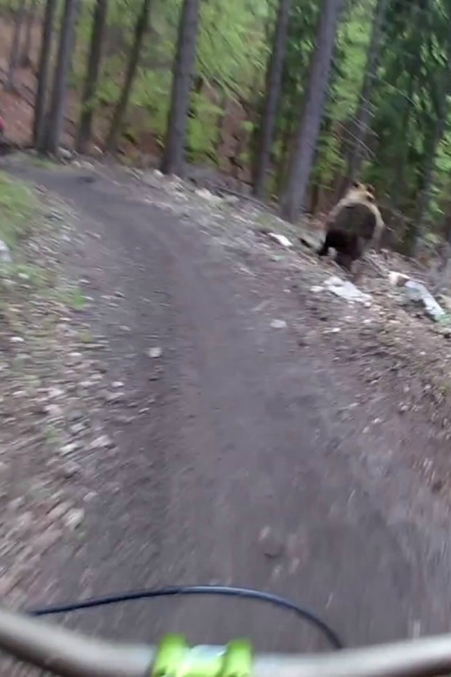 Terrifying Moment Bear Chases Riders On A Bike Path!