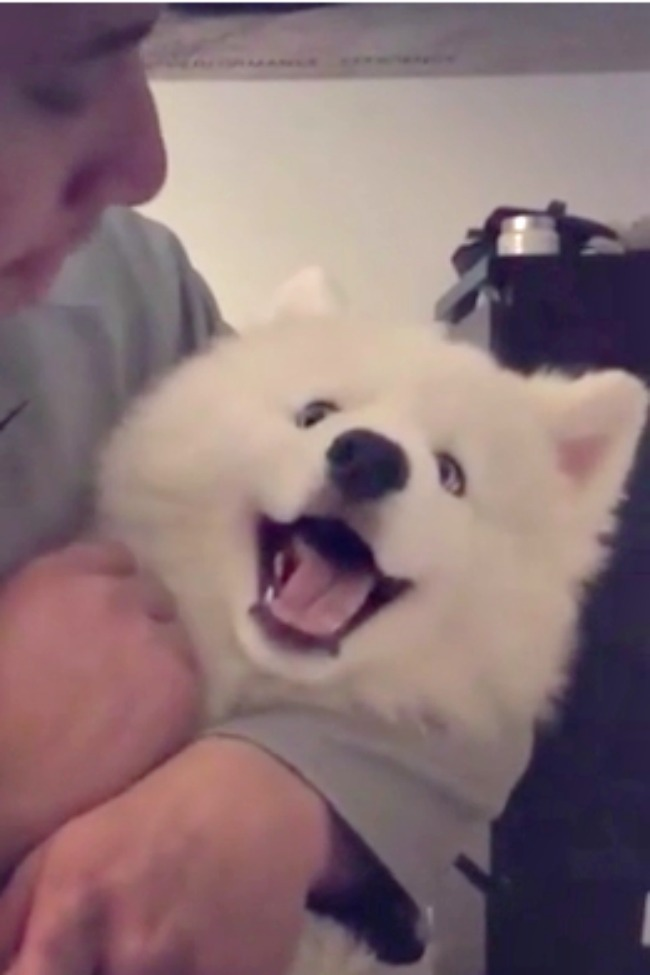 Husky Puppy Refuses To Be Scolded By Owner