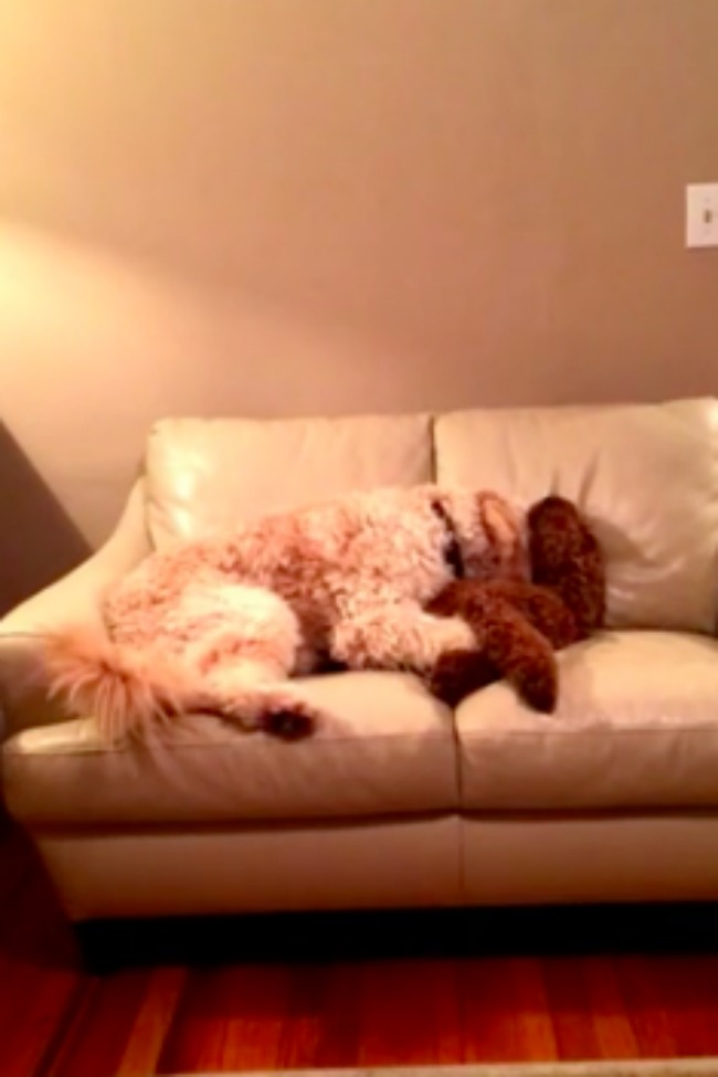 This Dog Comforts His Friend Having A Bad Dream