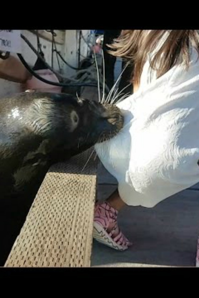 Terrifying Moment When A Sea Lion Snatches A Girl Off A Wall And Drags Her Underwater!