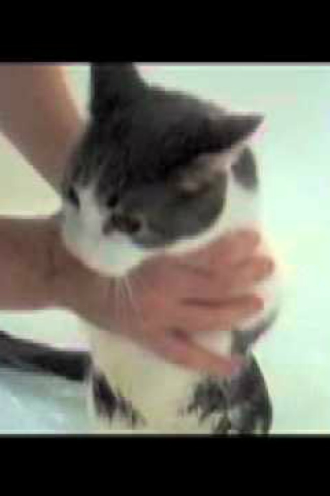 Man Tries To Give His Cat A Bath, Cat Cries Like A Human Baby