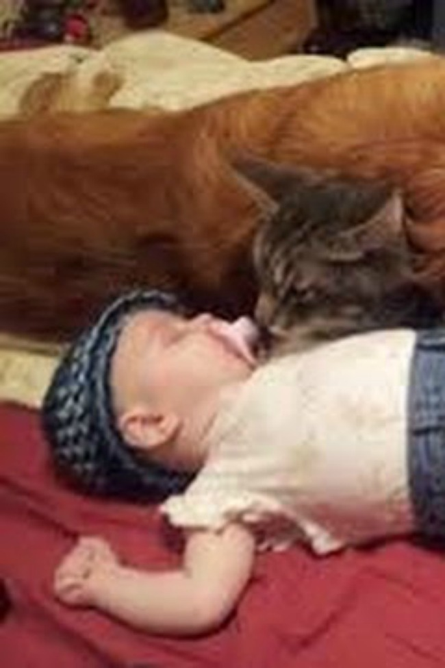Dogs And Cats Meeting Babies For The First Time Will Melt Your Heart!