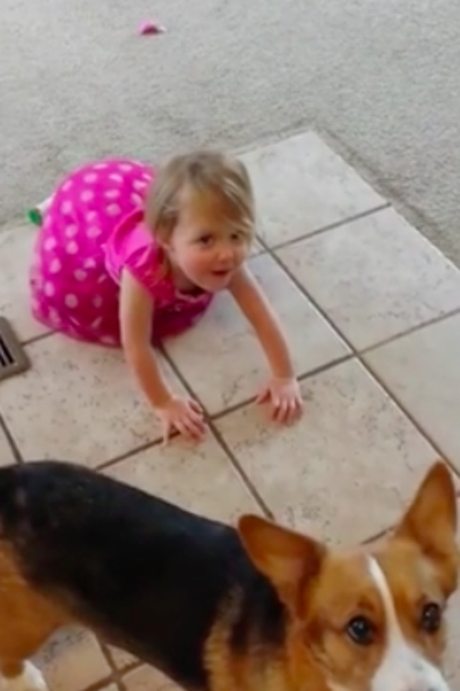 Two-Year-Old Imitates Dog In An Attempt To Get Treats!