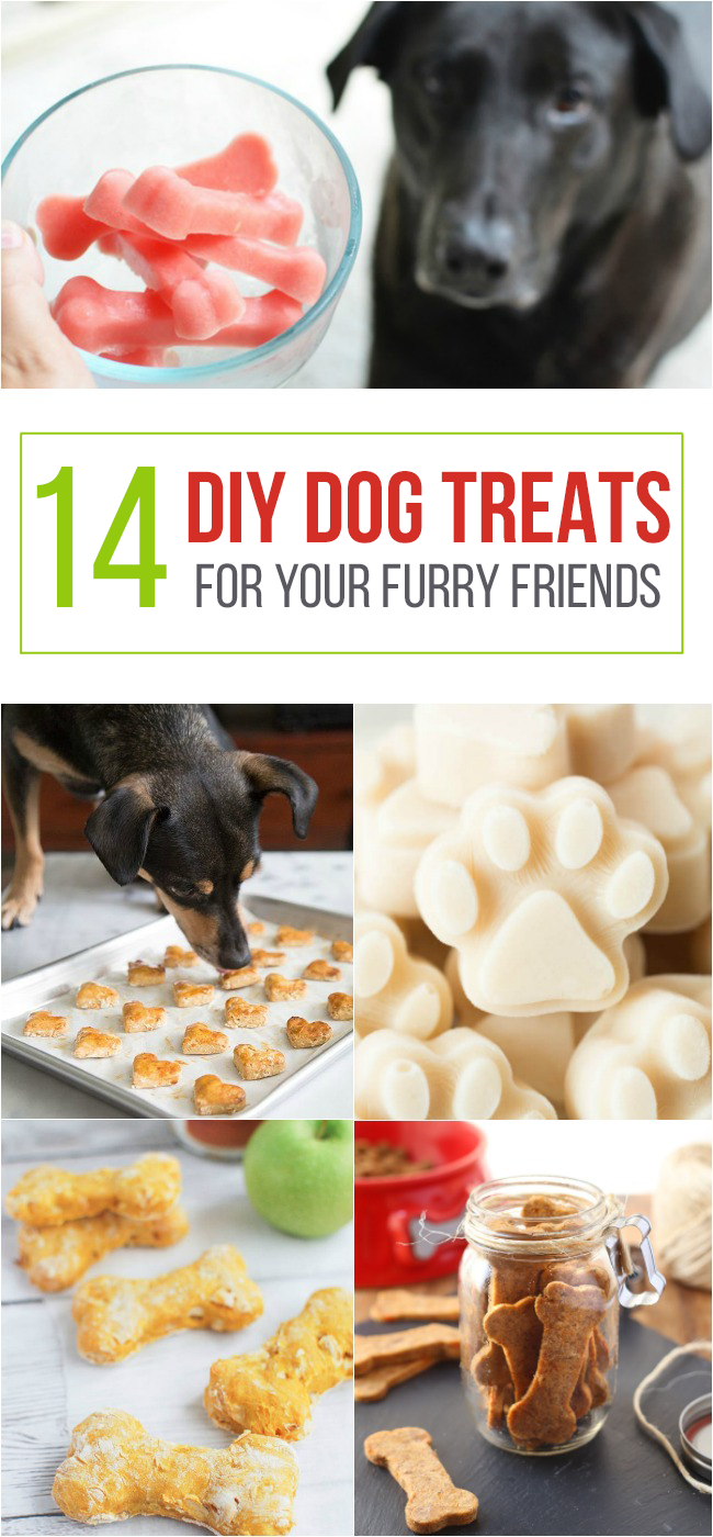 14 DIY Dog Treats for Your Furry Friend- with baked, and set treats.