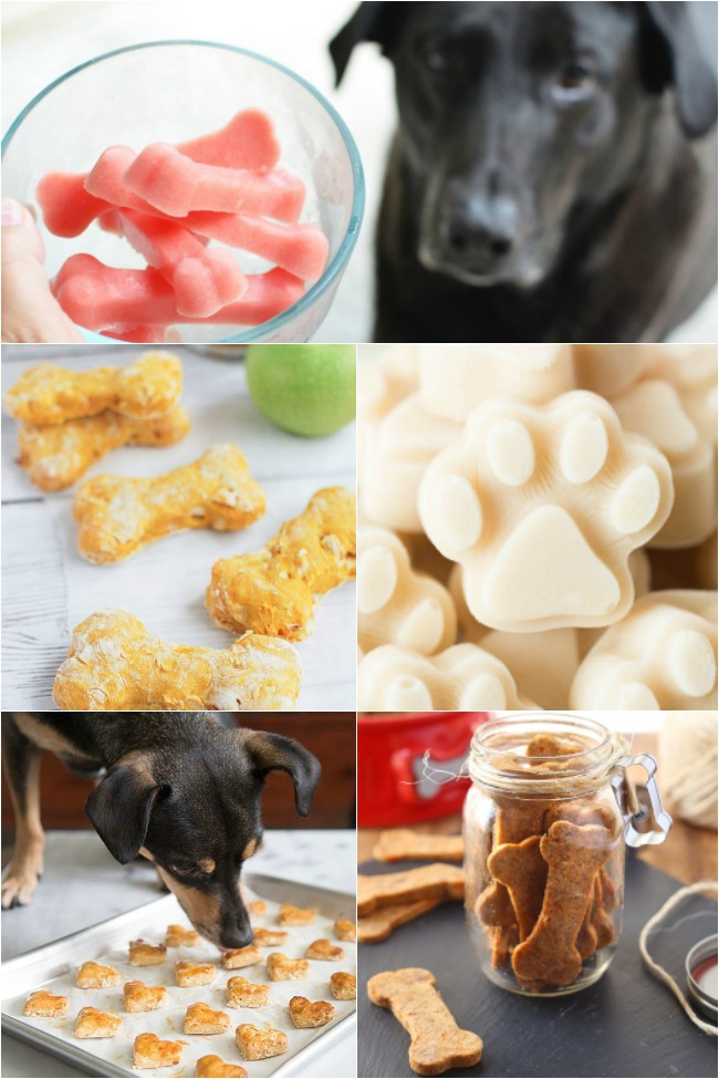 14 Best Homemade Dog Treats for Your Furry Best Friend