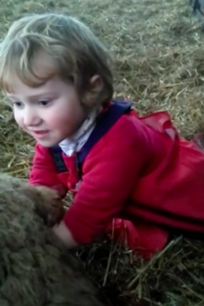 Three-Year-Old Little Girl Delivers Baby Lamb On A Farm