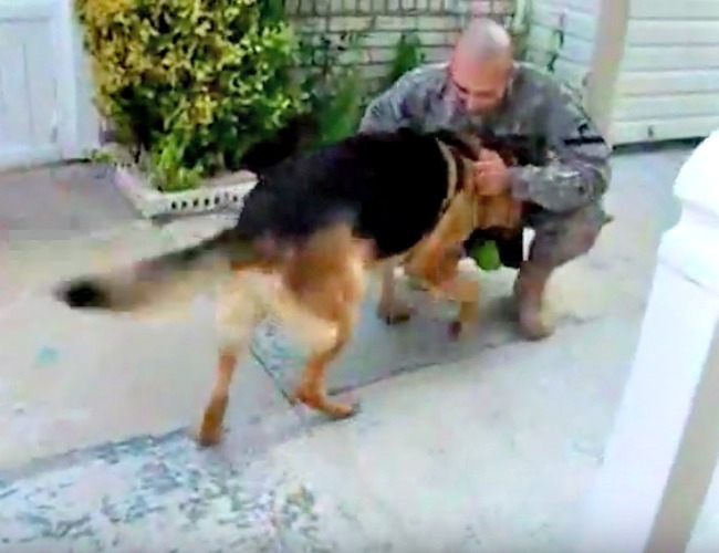 screenshot from video of dog being reunited with soldier