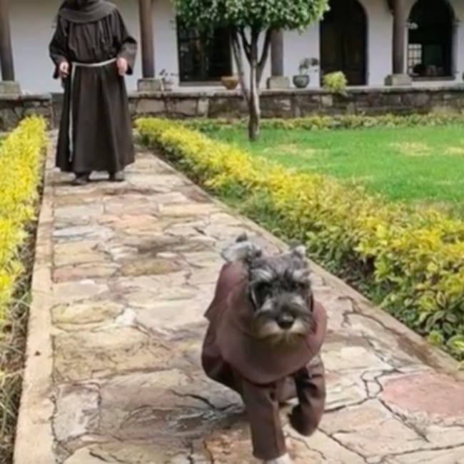 screenshot from monastery dog adoption - dog running and dressed as a monk