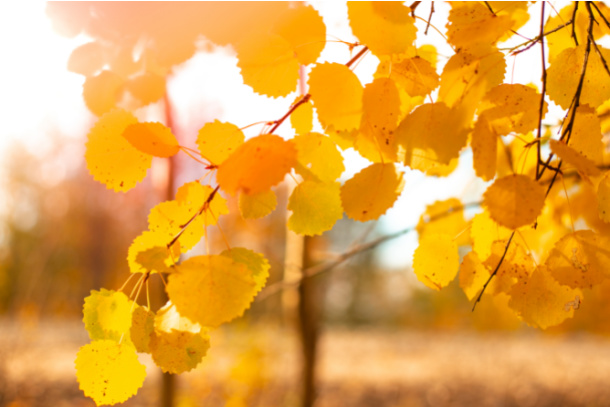 Find a yellow leaf on fall nature scavenger hunt for kids - Kids Activities Blog