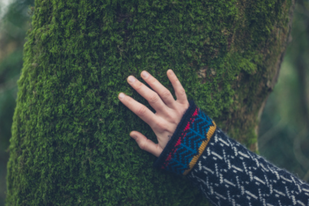Find moss on the fall nature scavenger hunt for kids - Kids Activities Blog