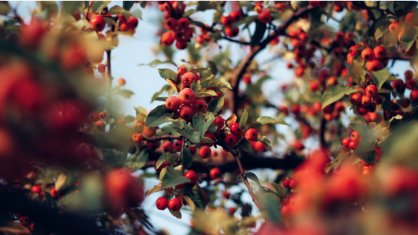Find some fall berries on the nature scavenger hunt for kids - Kids Activities Blog