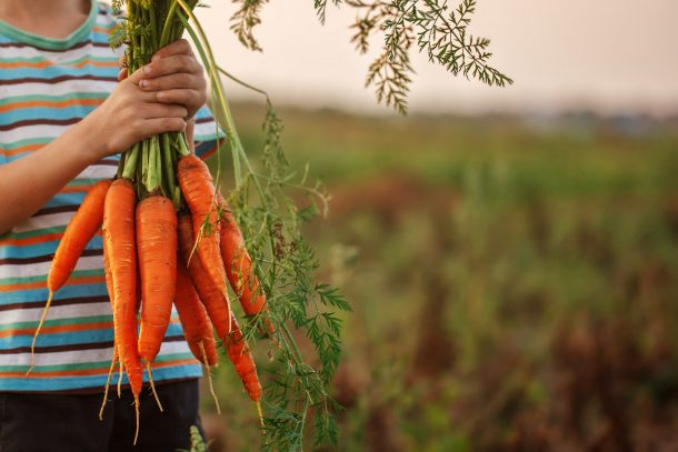 Fresh carrots from this kid's garden help by a boy outside in a striped blue shirt.