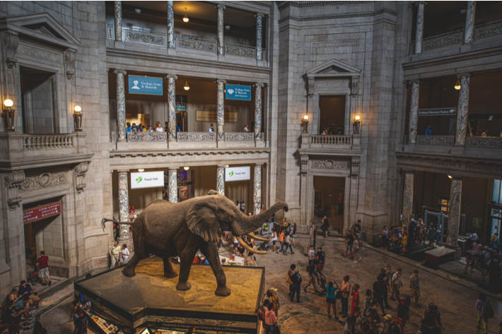 Visit the Museum of National History in Washington DC - Kids Activities Blog