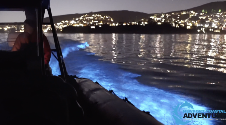 These Boaters Caught 'Glowing Dolphins' On Video and It's The Coolest Thing You'll See Today
