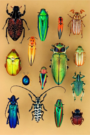 Smithsonian learning lab for kids with colorful beetles