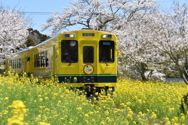 Japan train ride - spring train ride video for kids