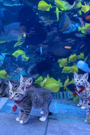 Kittens in aquarium