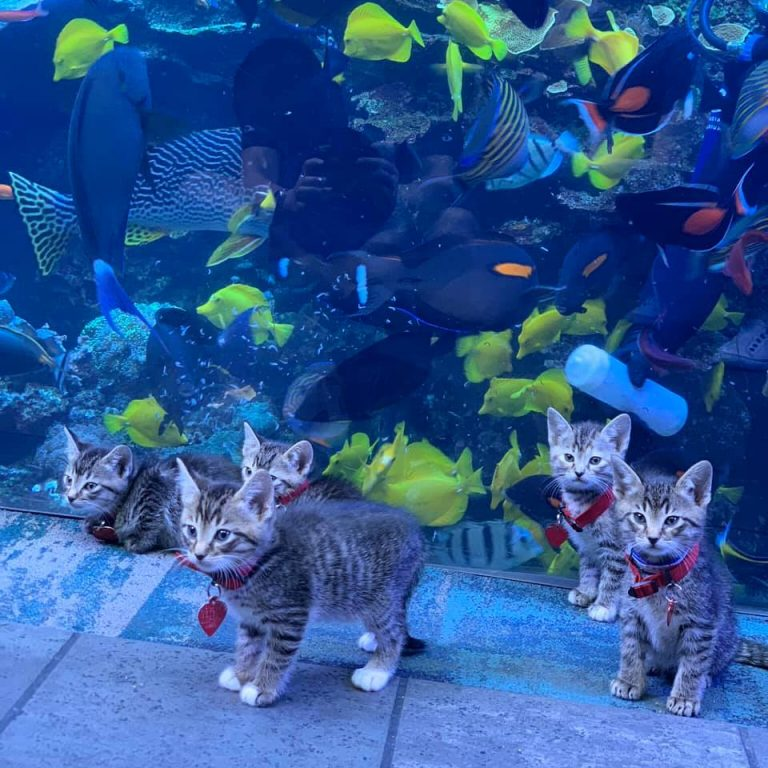 These Kittens Visited The Aquarium And It's The Cutest Thing You'll See All Day