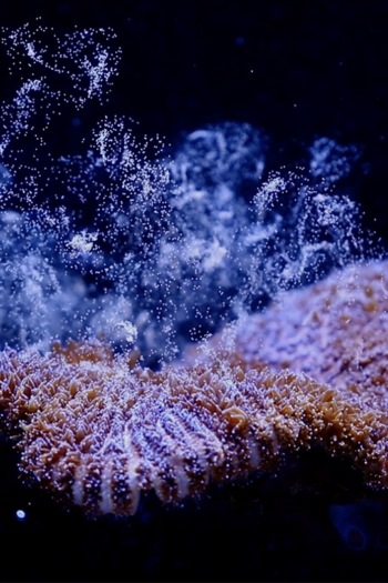 Coral reef discovery