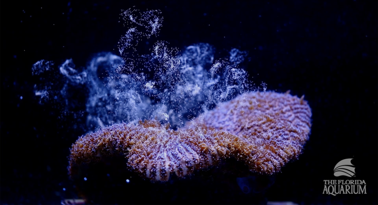 This Florida Aquarium Made A Discovery That Could Save The World's Third Largest Coral Reef From Extinction