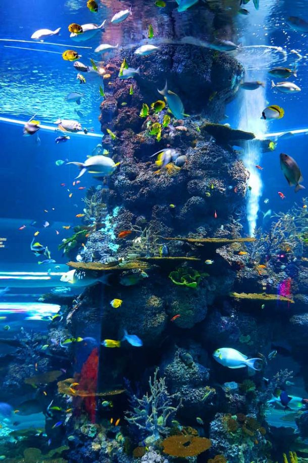 Tall coral reef with bright, tropical fish encircling it in a large, well-lit aquarium tank.